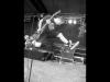 spermbirds-jump-05